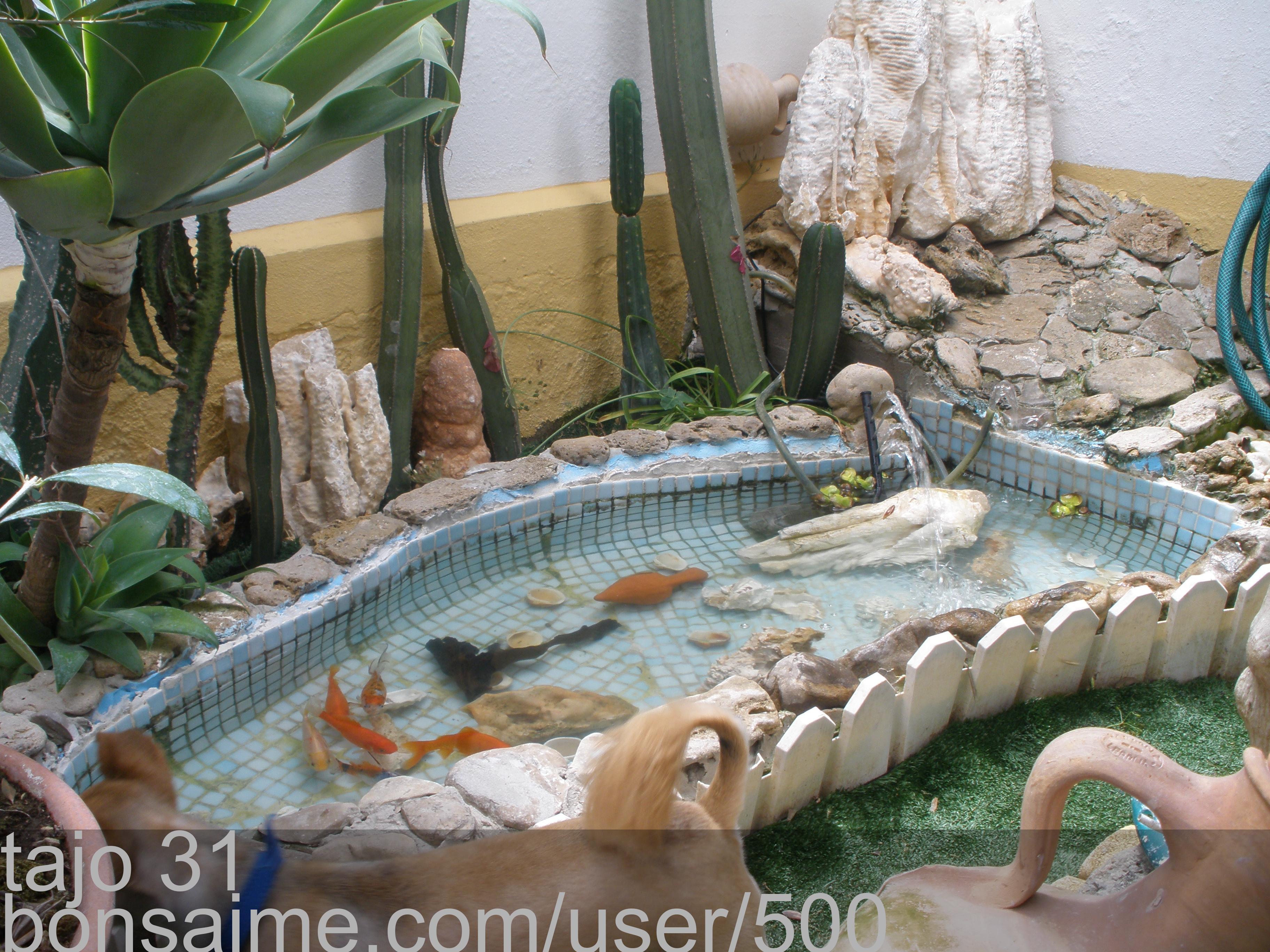 Bonsai estanque con peces y otro trozo del jardin tajo 31 - Estanques en el jardin ...
