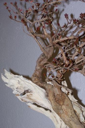 Bonsai Granado - Punica Granatum - cbvillena
