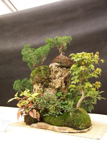 Bonsai Composición sobre Roca - Arces y Juniperos - CBALICANTE