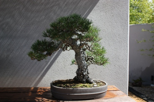 Bonsai 1179 - Fran Rives