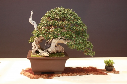 Bonsai Jose Luis Blasco Paz - Mirtus Communis - EBA Lorca