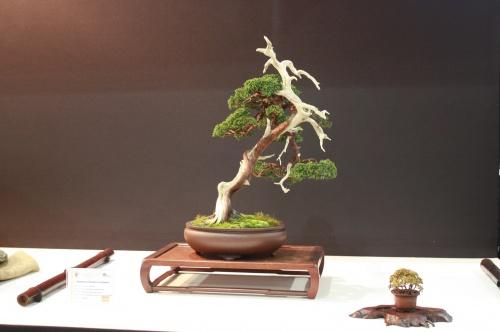 Bonsai Juniperus Chinensis - Juan Jose Fernandez - EBA Lorca