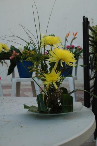flores 'amarillas'
