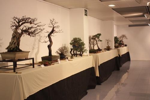Bonsai Sala Exposiciones 2 - CBALICANTE
