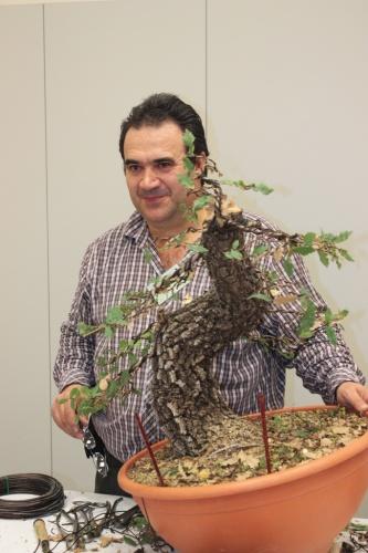Bonsai Antonio Torres - Trabajo final Demostración X Jornadas Mediterraneas Torrevieja 2012 - torrevejense