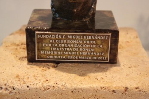 Bonsai Reconocimiento Fundación Miguel Hernandez al Club Bonsai Oriol - CBALICANTE