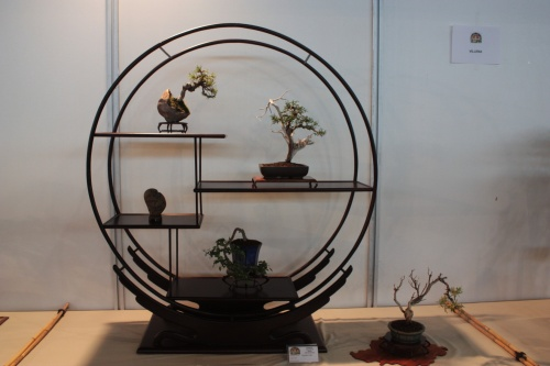 Bonsai Expositor Sohin - CBALICANTE