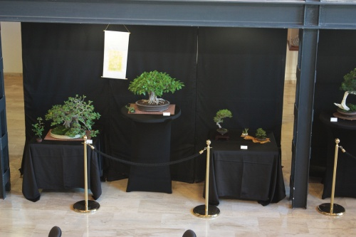 Bonsai Otra vista general de la exposicion - Bonsai Oriol