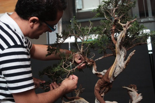 Bonsai Como alambrar correctamente - Bonsai Oriol