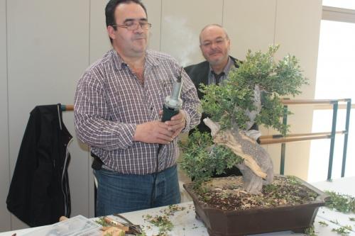 Bonsai Demostración con Boj en Torrevieja - Antonio Torres