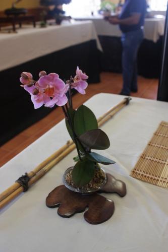 Bonsai Orquidea - CBALICANTE