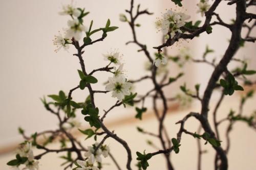 Bonsai Detalles de flor del Endrino Bonsai - torrevejense