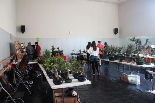 Bonsai Venta Mercadillo de bonsai y material en Torrevieja - torrevejense