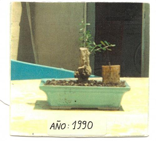 Bonsai 12863 - vicente solbes