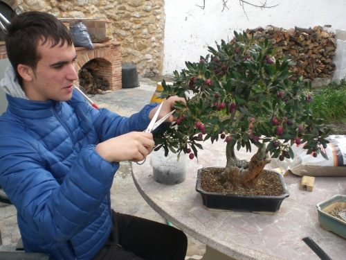 Bonsai 13003 - vicente solbes