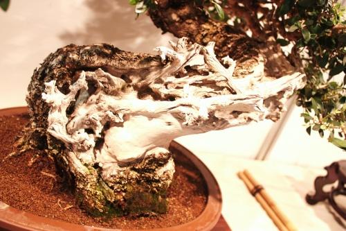 Bonsai Tronco de Bonsai Acebuche - CBALICANTE