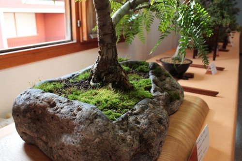 Bonsai Maceta de piedra - Club Novelda - Assoc. Bonsai Muro