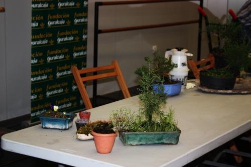 Bonsai Algunas plantas que nos servirán para componer el paisaje - torrevejense
