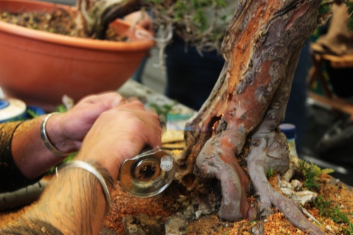 Bonsai Usando el soplete - torrevejense