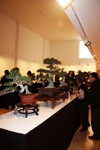 Bonsai Comenzamos la exposicion de bonsai de las jornadas mediterraneas de Torrevieja - torrevejense