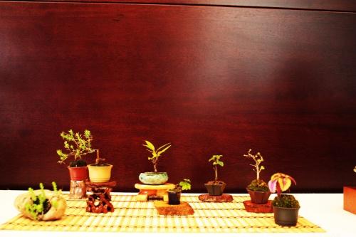 Bonsai Coleccion de Mames y Kusamonos de Jose Gomez del Rio - torrevejense