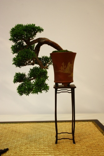 Bonsai Junipero Chino - Miguel Alonso 2010 - CBALICANTE