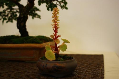 Bonsai Detalle decorativo del bonsai - CBALICANTE