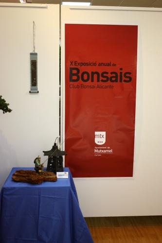 Bonsai Entrando en la Casa de Cultura de Mutxamel - Club Bonsai Alicante - CBALICANTE