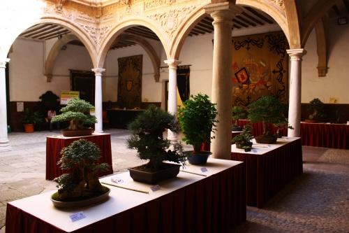 Bonsai En el palacio de Guevara - Amigos del Bonsai Lorca