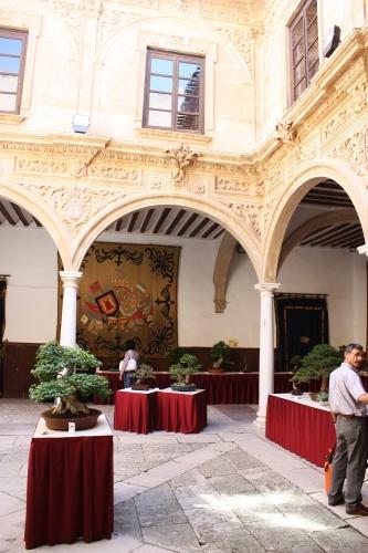 Bonsai Bonsais en el Palacio de Guevara - Amigos del Bonsai Lorca