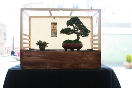 Bonsai Junipero Itoigawa de Pablo Vinal - torrevejense