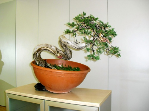 Bonsai Trabajo final... - torrevejense