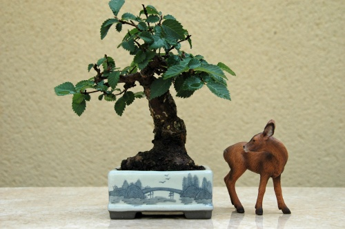 Bonsai 8743 - VICENTE RODRIGUEZ