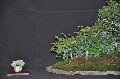 Bonsai Bosque - josegoderi