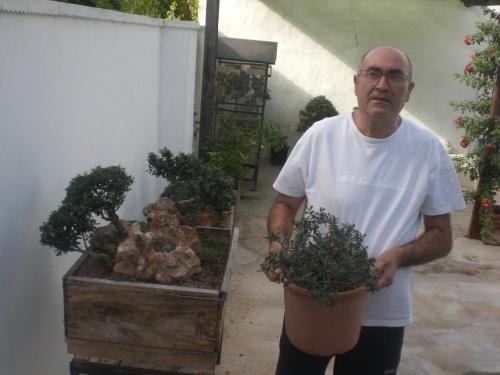 Bonsai olivos sobre piedra. Falta la copa [#Sin Título#] - vicente solbes