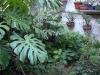 algunos de los que creo que son bonsais o lo seran alguna vez ¿