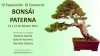 Cartel Bonsai Paterna, IV Exposición y III Concurso de Bonsái